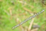 20120616-1135-Lauder-4689