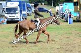 20130727-1132-braco-5196a