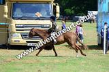 20130727-1132-braco-5199a